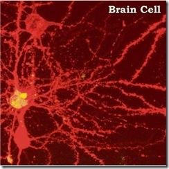 neuron-galaxy1